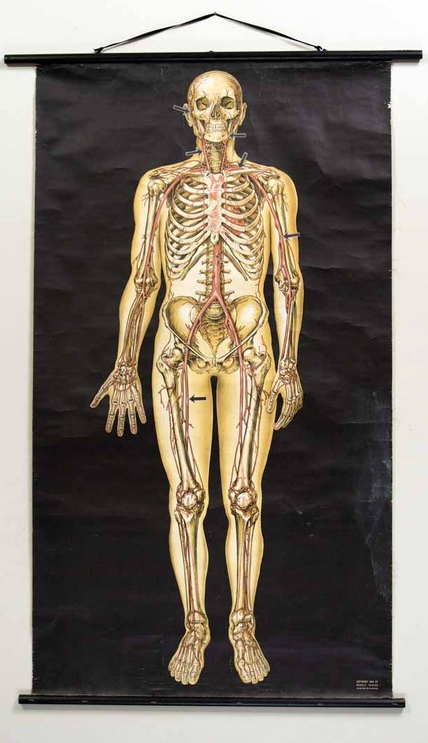 SChartSkeleton1